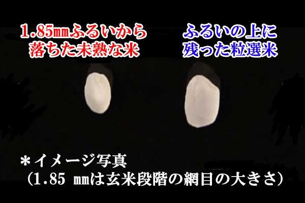 お米の大きさ比較
